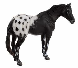 Black Appaloosa Stallion